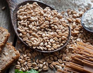Експорт зерна з початку сезону склав 31,3 млн тонн