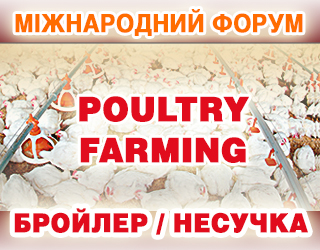 Яка вітчизняна курятина має шанси на експорт