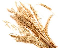 Ціни на українську пшеницю в січні досягли найвищого за останні чотири роки рівня