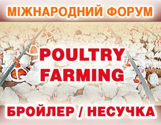 Святе місце порожнє не буде: в Європі українська курятина частково замінила бразильську