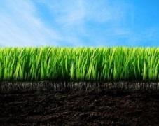 В ґрунтах України середній уміст рухомих сполук фосфору нижче оптимального