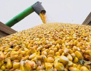 ІМК торік зібрала рекордний урожай сільгоспкультур