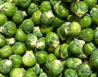 Строки прищипування впливають на кількість головочок брюссельської капусти