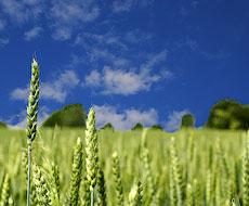«Агроліга» очікує на гарний урожай озимих