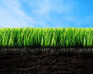 Надлишок хрому спочатку проявляється на корені рослини