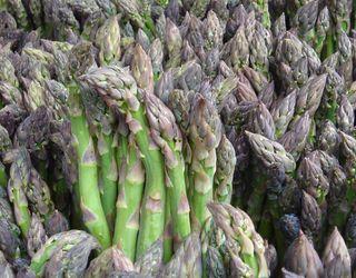 В Україні створять полігон для випробування гібридів зеленої спаржі від світових виробників