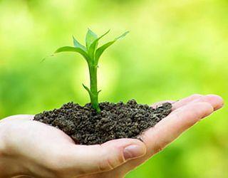 Незбалансоване живлення спричиняє дегуміфікацію ґрунтів