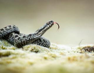 На Львівщині відкрили першу в Україні зміїну ферму