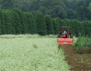 Заорювання тонни соломи еквівалентне 3-4 тоннам гною