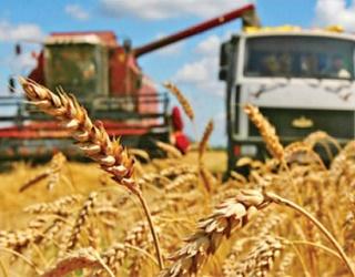 Аграрії зібрали 1,6 млн тонн зерна нового врожаю