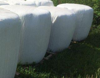 Сімейна ферма на Львівщині почала сінажувати трави у плівку