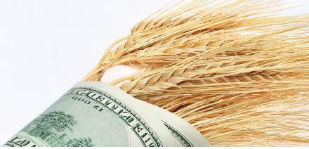 Конкурентні переваги українського агробізнесу оцінили британці.