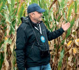 Насіння гібридів кукурудзи компанії «Сингента» українського виробництва: врожайність, стабільність, якість
