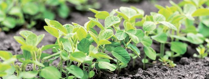 Потужний старт для отримання високих урожаїв сої