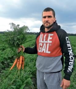 Рентабельна морква