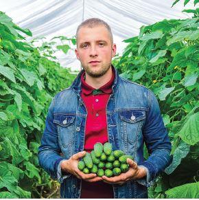 Огірки на Київщині