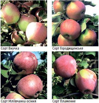 Яблука для переробки