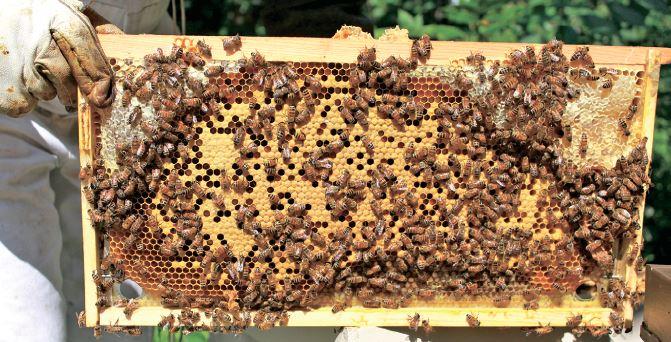 I бджола нам у поміч
