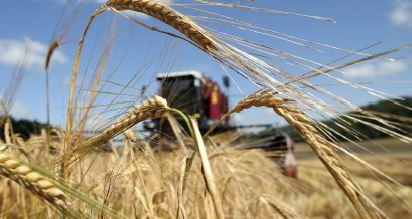 Зернові здобутки й очікування