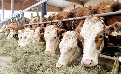 Поліпшення гігієни — запорука здоров'я та продуктивності тварин