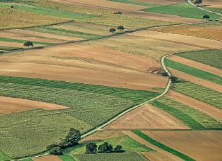 «Мрія агрохолдинг»: відлучення території