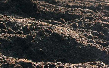 Міфи та реалії сучасного землеробства