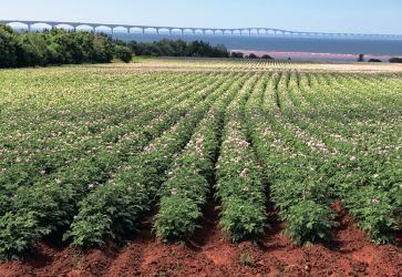 Ад'юванти – нові можливості для пестицидів!