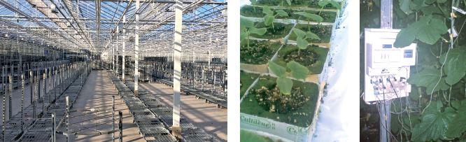 Сучасна агротехніка огірка