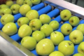 Сильна гривня та високі внутрішні ціни гальмують експорт яблук
