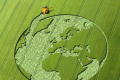 Інноваційний аграрний стартап з України репрезентують світові