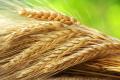 Обсяги виробництва жита зросли на 34%