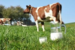 Виробництво молока за дев'ять місяців скоротилося на 4%