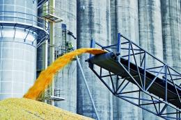 Елеватори G.R. Agro прийняли 25 тис. тонн соняшнику та кукурудзи