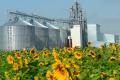 Приватним елеваторам пропонують дозволити приймання зерна Аграрного фонду