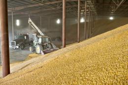 Елеватор на Сумщині розпочав приймання зерна