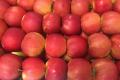 Африка та Азія цікавляться польськими яблуками