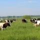 Проблеми з травою на пасовищах після опадів