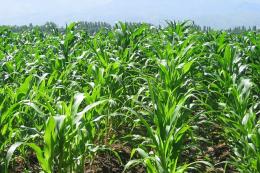 У «Зернопродукті МХП» збільшують частку органічних добрив у системі живлення культур