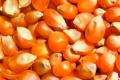 Corteva Agriscience відкриє перший у Європі Центр технологій обробки насіння