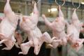Дорогі корми підвищують ціни на птицю в Казахстані