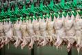 Україна переконуватиме Єврокомісію застосувати принцип зонування до місць спалаху грипу птиці