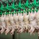 Реорганізація Держпродспоживслужби загрожує втратою експорту, – Союз птахівників України