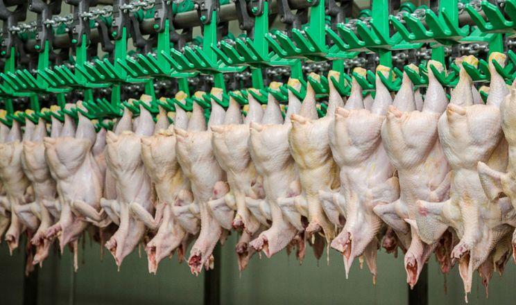Виробники, які впровадять галузевий стандарт вирощування птиці без антибіотиків, маркуватимуть свою продукцію