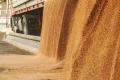 Баришівське ХПП збільшило потужності з приймання зерна