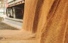 Закупівельні ціни на пшеницю на елеваторах виросли до максимуму поточного сезону