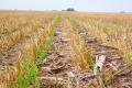 Ноу-тілл дозволяє зменшити втрати азоту в ґрунті