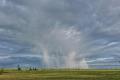 Дощі та паводки спричинили пошкодження та загибель частини посівів у західних областях