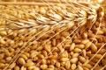 Експортні котирування на чорноморську пшеницю різко зросли до місячного максимуму