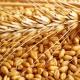 Перший мільйон: на Сумщині зросла урожайність зернових