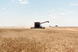 Затримка збиральної кампанії піднімає спотові ціни на українську пшеницю
